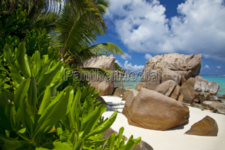 spiaggia paradisiaca con piante esotiche