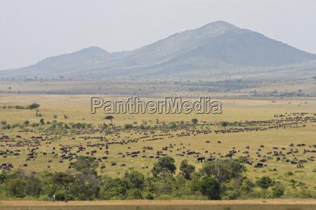 elefante safari riserva di caccia bufalo