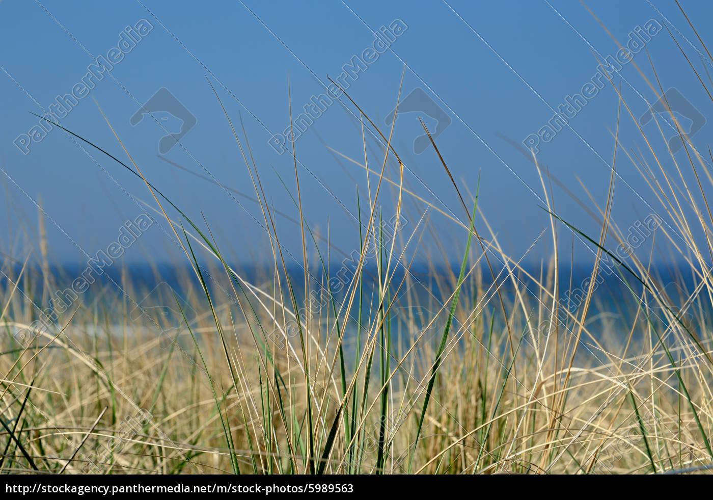 erbe, delle, dune - 5989563