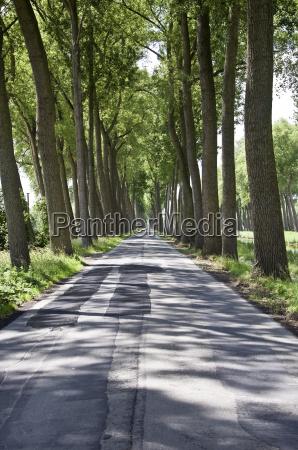 bello bella viaggiare ambiente relax albero