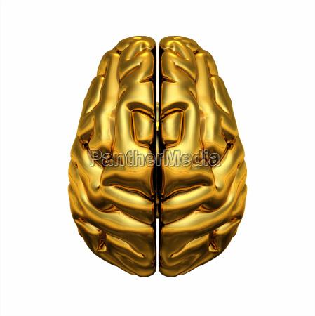 loro brain vista dallalto