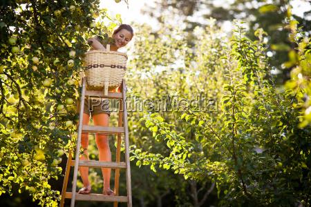 donna giardino vendemmia mele mela frutteto