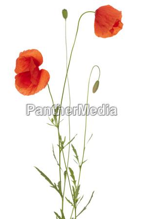primo piano close up fiore flora