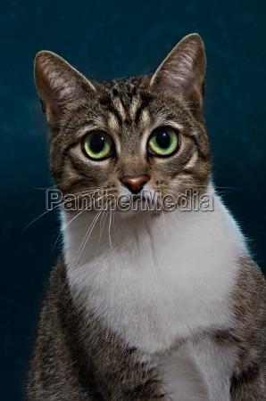 animale triste gatti lutto dolore innocente