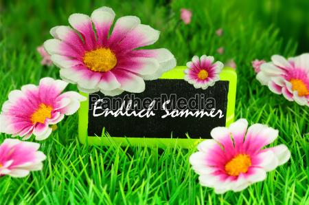 fiore fiori estate testo sanguinare scudo