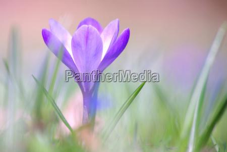 ambiente piantare seminare fiore fiori primavera