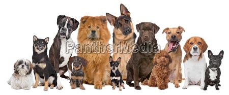 gruppo di dodici cani
