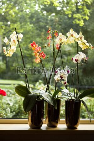vasi di piante con le orchidee