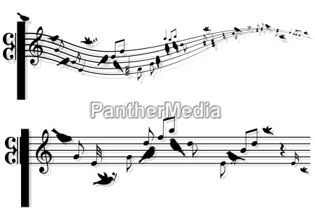musica musicale animale uccello nota fondale