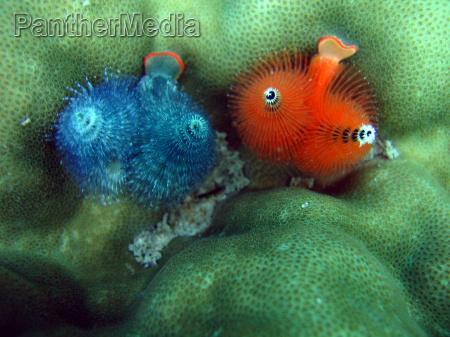 underwater worm