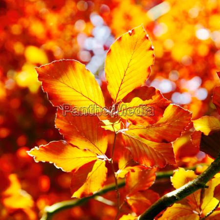 arancio vivo foglie dautunno