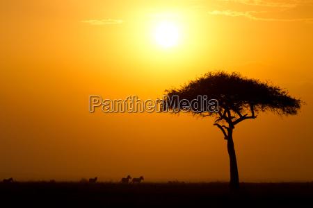 tramonto riserva di caccia acacia