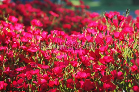 red flowers with shallow depth