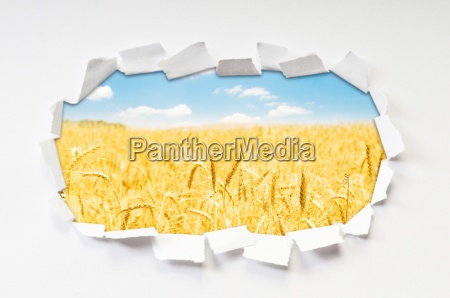 wheat field through hole in