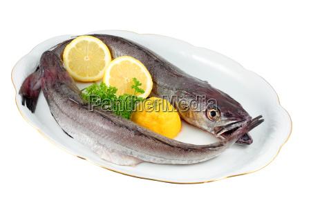 cibo rilasciato acqua mediterraneo acqua salata