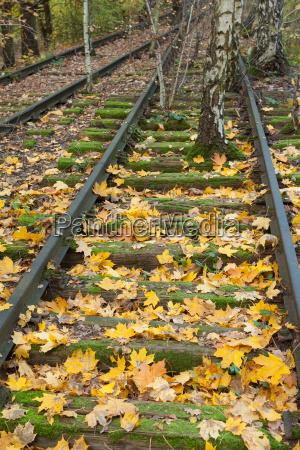 track leaves
