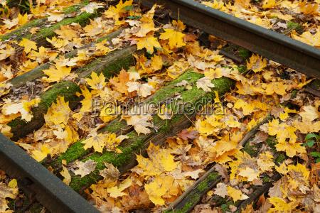 fall foliage in tracks