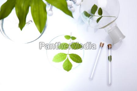 vetreria da laboratorio contenente piante in
