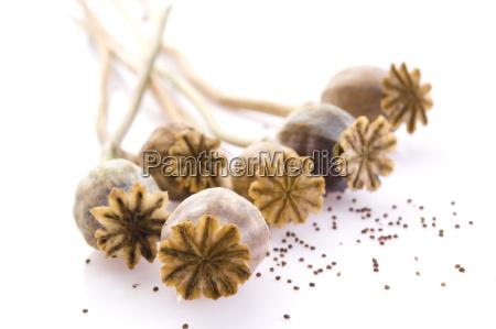 semi di papavero e teste di