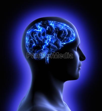 attivita cerebrale