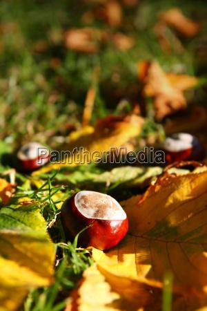 autunnale castagne castagno autunno