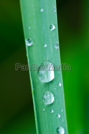 stelo gocce dacqua acqua prato erba
