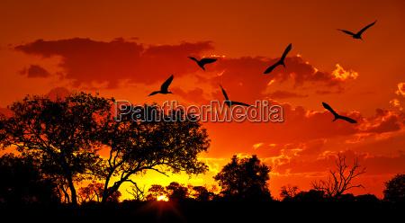 uccello tramonto africa sud natura paesaggio