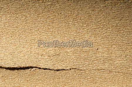 tree crust close up