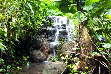 cascata paesaggio natura pianta