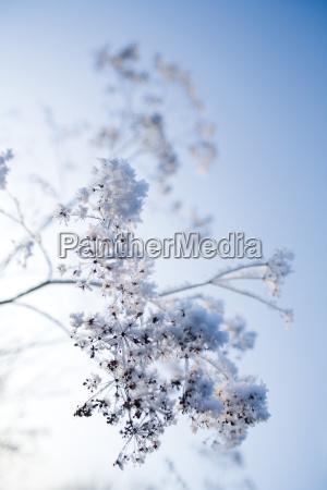 inverno cocaina farmaco gelo neve congelamento