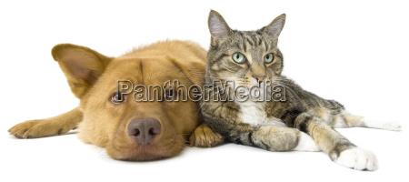 cane e gatto insieme grandangolare