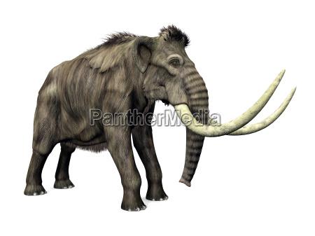 elefante avorio zanna mammut paleontologia