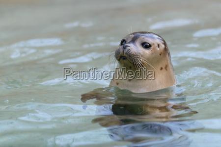 zoo prole cucciolo bambino foca acqua