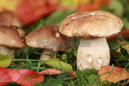 foglia foglie allaperto fuori verdura funghi