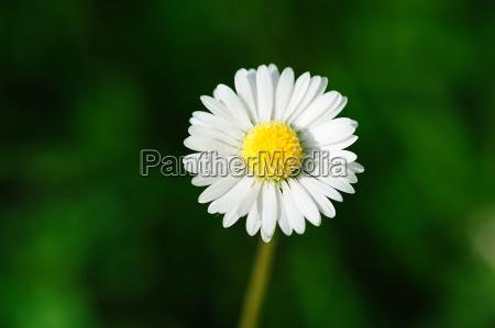 butterbluemchen