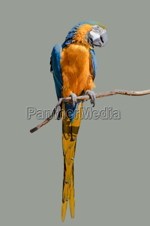 uccello uccelli penne piume becco piumaggio