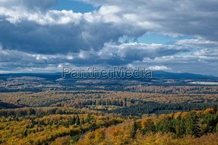 resina foreste montuoso foresta autunno