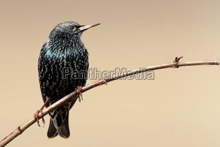 animale uccello animali uccelli stella vecchio