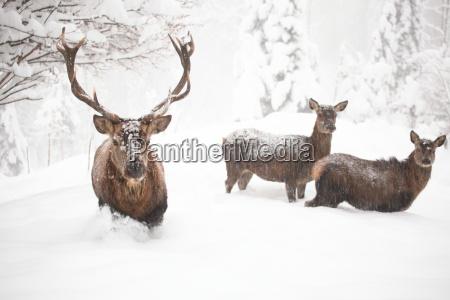 dettaglio femminile inverno animale mammifero freddo