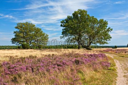 luneburg heath paesaggio heath con la