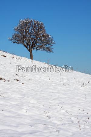 inverno freddo nevoso quercia neve pianta