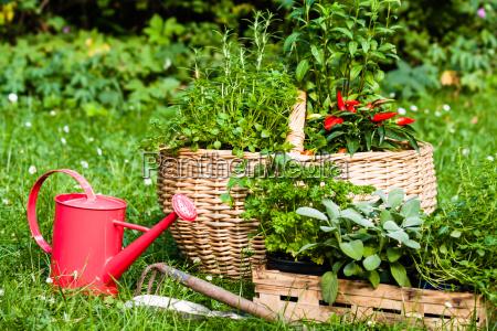 spezia giardino piantare seminare verde pianta