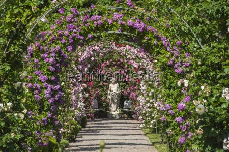 rose stampa giardino baden baden