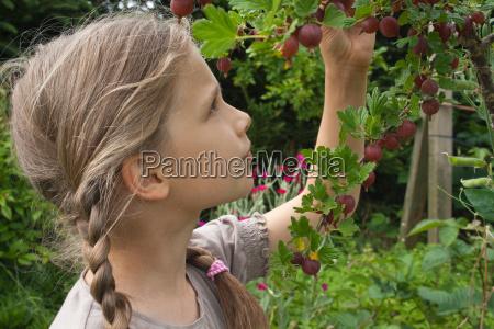 giardino giardini bacca uva spina giovani
