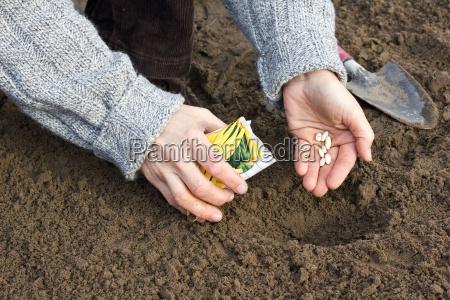 mano mani primavera fagioli spermatozoo sperma