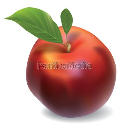cibo singolo rilasciato freschezza frutta appartato