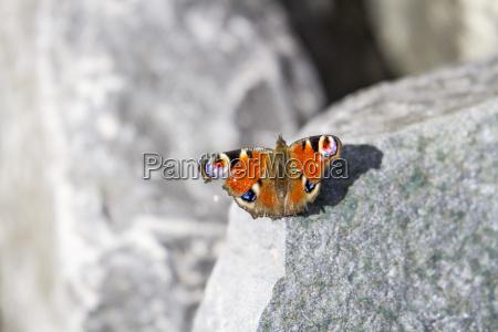 blu fioritura nero scarafaggio biologia bellezza