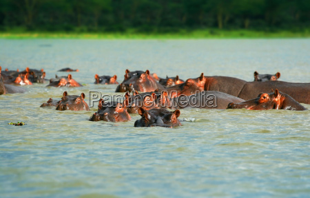 animale mammifero africa kenia natura africano