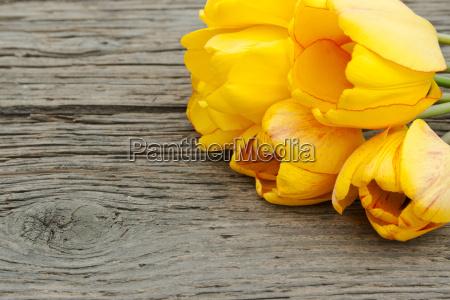 fiore verde legno marrone fioritura nozze