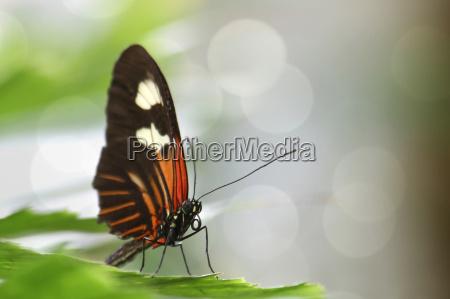 ambiente animale farfalla animali farfalle natura